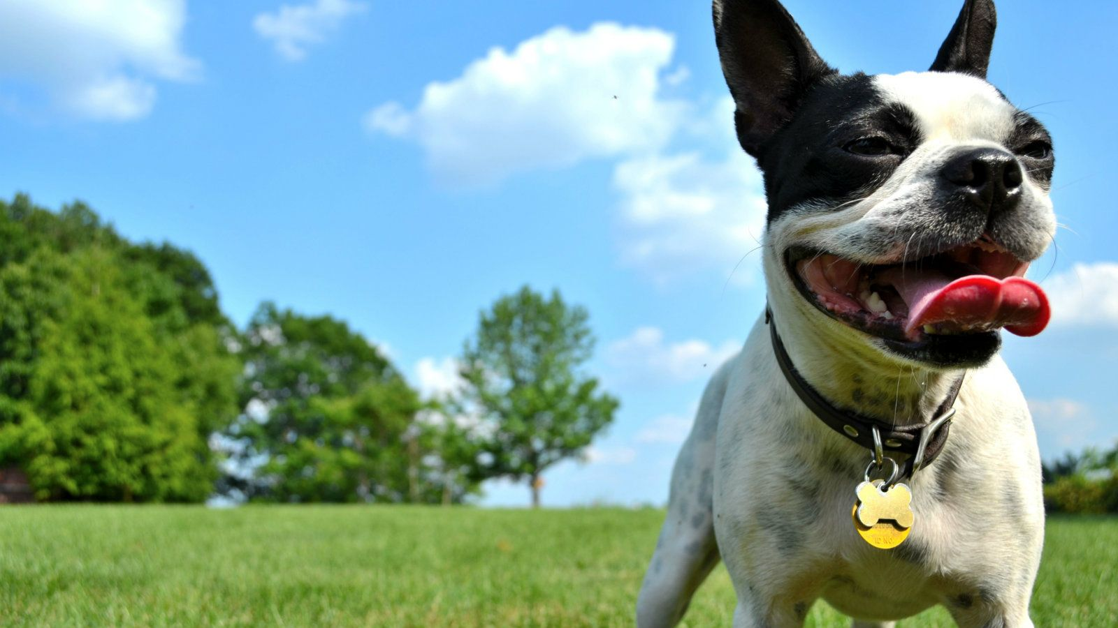 pet friendly hotels in chesapeake, va